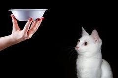 γάτα περίεργη Στοκ Φωτογραφία