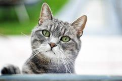 γάτα περίεργη Στοκ φωτογραφία με δικαίωμα ελεύθερης χρήσης