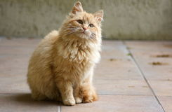 γάτα περίεργη στοκ εικόνες με δικαίωμα ελεύθερης χρήσης