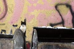 γάτα περιπλανώμενη Στοκ Φωτογραφία