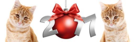 Γάτα πιπεροριζών και κόκκινη σφαίρα Χριστουγέννων με το κόκκινο τόξο κορδελλών σατέν ελεύθερη απεικόνιση δικαιώματος