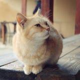 Γάτα πιπεροριζών που κοιτάζει από το πλαίσιο - αναδρομικό φίλτρο Στοκ εικόνα με δικαίωμα ελεύθερης χρήσης