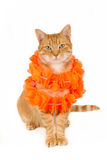 Γάτα πιπεροριζών συνεδρίασης με boa στοκ εικόνες με δικαίωμα ελεύθερης χρήσης