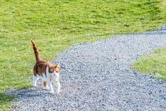 Γάτα πιπεροριζών Στοκ Εικόνες