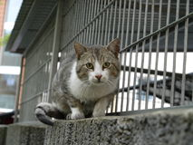 Γάτα που έχει σχέση Στοκ Εικόνα
