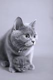 Γάτα που αγκαλιάζει το μικρό μωρό της Στοκ φωτογραφίες με δικαίωμα ελεύθερης χρήσης