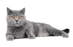 γάτα που απομονώνεται βρ&epsi Στοκ εικόνα με δικαίωμα ελεύθερης χρήσης