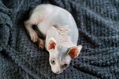 Γάτα που βάζει σε ένα κρεβάτι στοκ εικόνες
