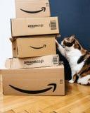 Γάτα που βάζει το πόδι στα πολλαπλάσια κιβώτια της Αμαζώνας Στοκ Φωτογραφίες