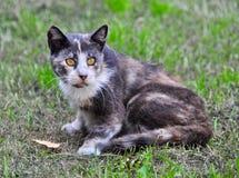 Γάτα που βρίσκεται κοντά στα μειωμένα φύλλα, φθινόπωρο Στοκ Εικόνες