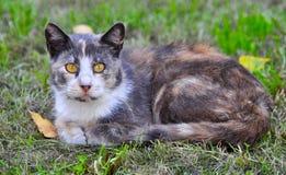 Γάτα που βρίσκεται κοντά στα μειωμένα φύλλα, φθινόπωρο Στοκ Εικόνα