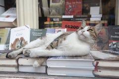Γάτα που βρίσκεται στα βιβλία στοκ φωτογραφίες με δικαίωμα ελεύθερης χρήσης