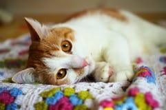 Γάτα που βρίσκεται στην ανάπαυση στο καρό στοκ εικόνες