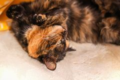Γάτα που βρίσκεται στην παλαιά αγροτική σόμπα στοκ εικόνα