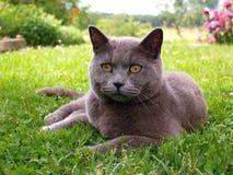 Γάτα που βρίσκεται στη χλόη στοκ φωτογραφία με δικαίωμα ελεύθερης χρήσης