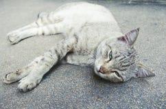 Γάτα που βρίσκεται στο έδαφος Στοκ Εικόνες
