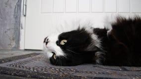 Γάτα που βρίσκεται στο ευπρόσδεκτο χαλί στοκ εικόνες με δικαίωμα ελεύθερης χρήσης