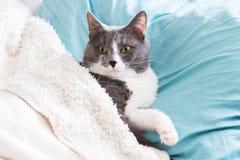 Γάτα που βρίσκεται στο κρεβάτι Στοκ Φωτογραφία