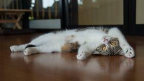 Γάτα που είναι οκνηρή Στοκ Εικόνες