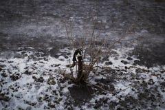γάτα που εκφοβίζεται Στοκ φωτογραφία με δικαίωμα ελεύθερης χρήσης