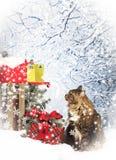 Γάτα που ελέγχει την ταχυδρομική θυρίδα για τις κάρτες Χριστουγέννων Στοκ Φωτογραφίες