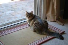 Γάτα που ενοχλείται τιγρέ με τη φωτογραφία Στοκ Εικόνες