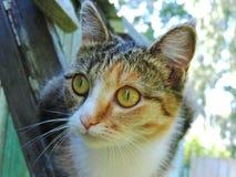 Γάτα που εξετάζει την απόσταση σε ένα wal Στοκ Εικόνα