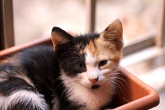 Γάτα που εξετάζει τη κάμερα Στοκ εικόνες με δικαίωμα ελεύθερης χρήσης