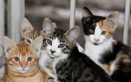 Γάτα που εξετάζει τη κάμερα Στοκ Εικόνες