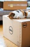 Γάτα που επιθεωρεί το κουτί από χαρτόνι υπολογιστών της DELL Στοκ Εικόνες