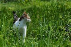 γάτα που επισημαίνεται στοκ εικόνα