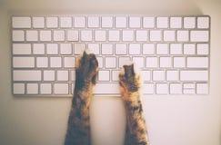 Γάτα που εργάζεται με το πληκτρολόγιο και το ποντίκι υπολογιστών στοκ εικόνες