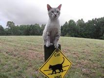 Γάτα που διασχίζει τη φρουρά στοκ εικόνες