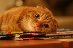 γάτα που ικανοποιείται Στοκ Φωτογραφία