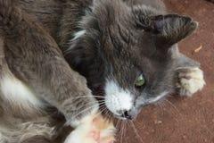 Γάτα που κατσαρώνουν σε μια σφαίρα Στοκ Εικόνες