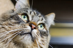 Γάτα που κοιτάζει μακρυά από τη κάμερα Στοκ εικόνα με δικαίωμα ελεύθερης χρήσης