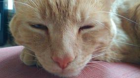 γάτα που κουράζεται Στοκ Φωτογραφίες