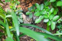 Γάτα που κρύβεται στον κήπο Στοκ φωτογραφία με δικαίωμα ελεύθερης χρήσης