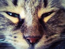 Γάτα που λάμπει στοκ φωτογραφίες