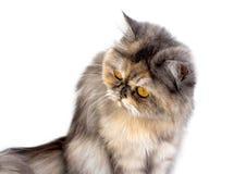 Γάτα που μονώνεται Στοκ εικόνα με δικαίωμα ελεύθερης χρήσης