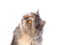 Γάτα που μονώνεται Στοκ εικόνες με δικαίωμα ελεύθερης χρήσης