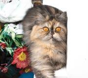 Γάτα που μονώνεται Στοκ φωτογραφίες με δικαίωμα ελεύθερης χρήσης