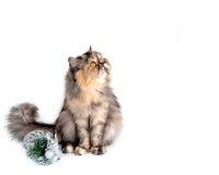Γάτα που μονώνεται Στοκ Φωτογραφίες