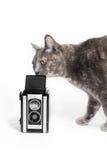 Γάτα που μυρίζει την εκλεκτής ποιότητας κάμερα στοκ φωτογραφία με δικαίωμα ελεύθερης χρήσης