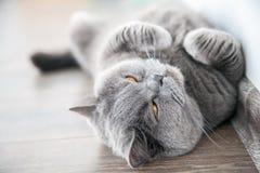 Γάτα που παρεκκλίνει τα μάτια του στοκ εικόνες με δικαίωμα ελεύθερης χρήσης