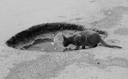 Γάτα που περιτυλίγει το νερό στοκ φωτογραφίες με δικαίωμα ελεύθερης χρήσης