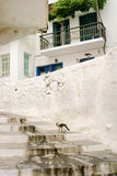 Γάτα που περπατά επάνω τα σκαλοπάτια στο ελληνικό νησί Στοκ φωτογραφία με δικαίωμα ελεύθερης χρήσης