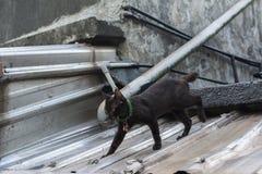 Γάτα που περπατά στη στέγη Στοκ φωτογραφίες με δικαίωμα ελεύθερης χρήσης