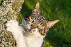 Γάτα που προσέχει σας Στοκ εικόνα με δικαίωμα ελεύθερης χρήσης