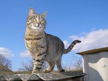 Γάτα που στέκεται ενάντια στον ουρανό Στοκ Εικόνα
